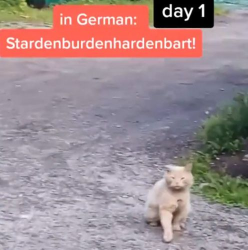 Man calls over cats in different languages - proving all cats are secretly German
