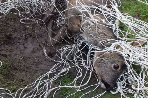 Mud-caked deer rescued after becoming dramatically tangled in Kirkintilloch football net