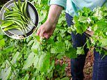 Meet the woman the chefs pay to forage their wildly delicious ingredients