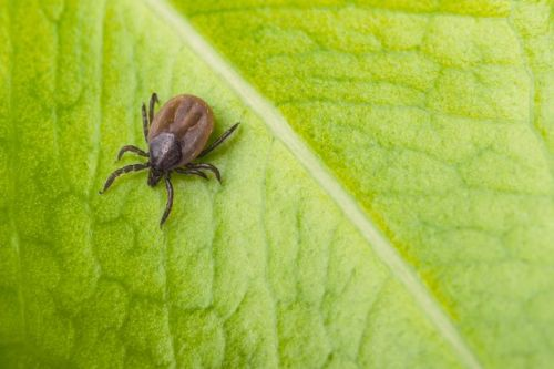 UK warning issued over extremely rare infection caused by tick bites