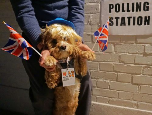 Dogs at polling stations - voters taking adorable pups to the polls as canine tradition returns for General Election