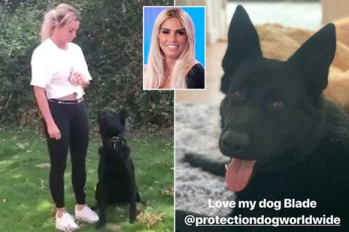 Katie Price devastated as guard dog 'bites tail off her pet cat'