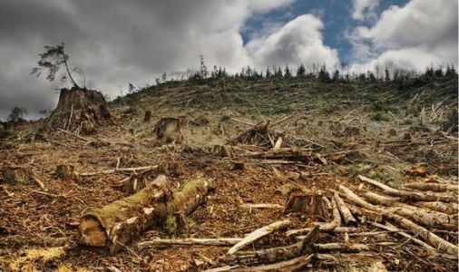 Earth is dying: Million species face extinction as we 'play Russian roulette' with nature
