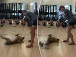 Adorable video shows Retriever pup joining into the workout at a fitness class on Twitter