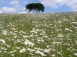 Nature experts unveil plan for network of wildflower 'highways'