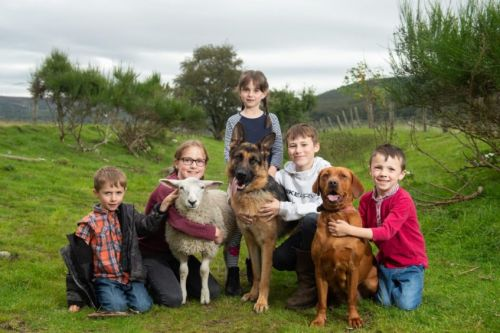 Overjoyed north family reunited with pet lamb Effie three days after she was bundled into van