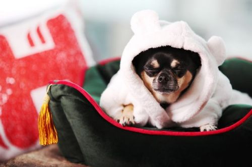 You can now get paid to go on holiday with your pets - including luxury hotels