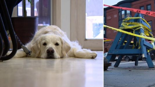Golden retriever yowled in agony while being electrocuted by faulty drain cover