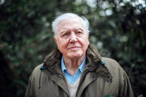 David Attenborough teams up with rapper Dave for Planet Earth special