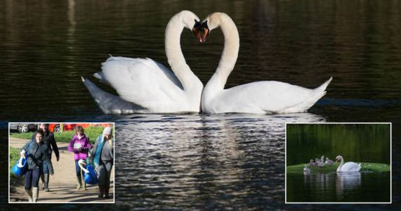 A beautiful love story filled with sadness, joy, swans and big blue Ikea bags