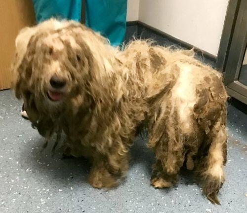 Before and after pictures show incredible recovery of abandoned dog given forever home