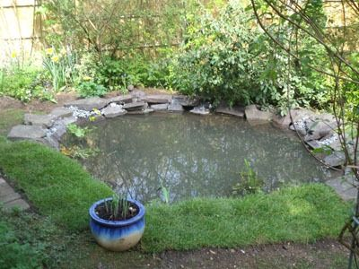 Making a pond - give it a go