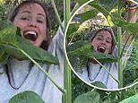 Jennifer Garner shows off her giant sunflowers in cheerful Instagram video