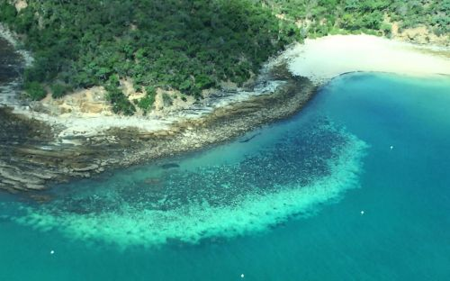 Great Barrier Reef suffers worst ever coral bleaching after record summer temperatures