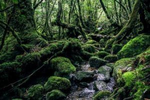 Yakushima Stunning Waterfalls Along the Trails and Its Weather Forecast for June