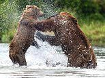Food fight! Two female bears unleash hell on one another as they battle over a salmon