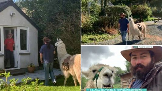 Llamas deliver food to elderly people stuck inside during pandemic