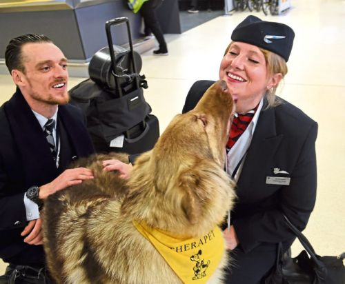 Canine crew has landed: How therapets are helping to soothe anxious travellers at Aberdeen airport