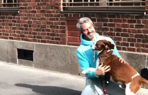 Andy Cohen's fans in shock as Bravo host gives up rescue dog Wacha after seven years due to 'aggression' issues