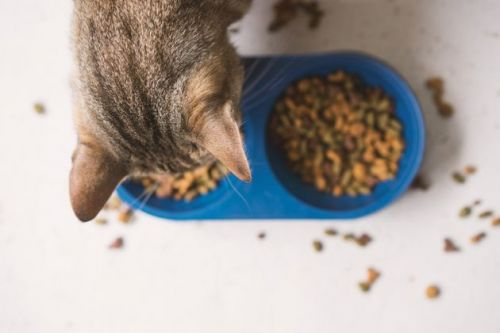 Should You Leave Your Cat Home Alone When You Go On Holiday?