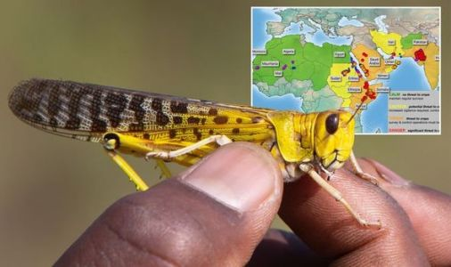 Locust plague: Threat to Africa emerges as swarms of Desert Locust breed in the millions