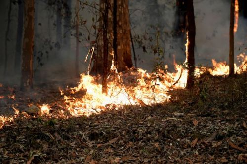 Australian Bushfires Will Help Push World's CO2 Levels To New Highs
