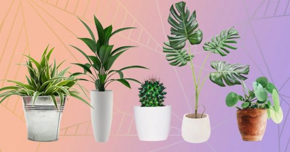 Garden centres that deliver plants and seeds to your door