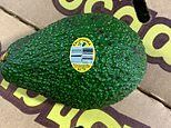 Avocado grower issues recalls in six states after samples of the fruit tested positive for listeria