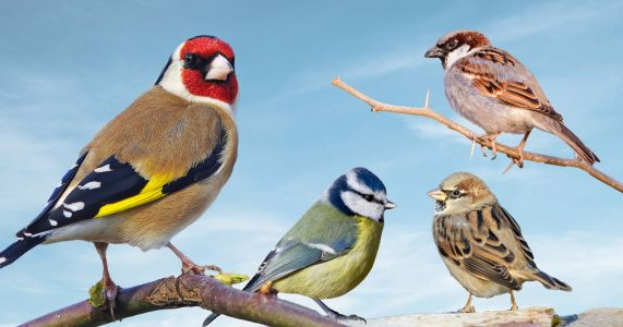 People look for tits and finches across the UK for the Big Garden Birdwatch