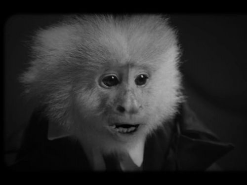 David Lynch grills a monkey in a new short on Netflix