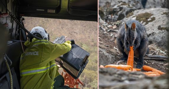 Helicopters drop carrots in fire-ravaged bush for Australia's starving wallabies