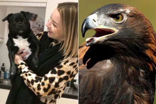 Pregnant woman fights an eagle after it tries to attack her dog - twice