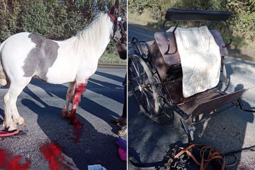 Woman's horror after horse left with devastating injuries in crash with car