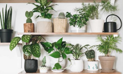 The 10 most-Googled house plants during lockdown: From the snake plant to the prickly cactus