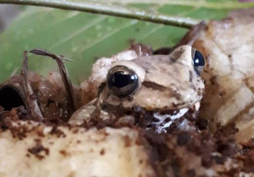 Exotic frog travels 5,000 miles from Colombia to Wales in supermarket bananas