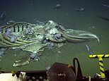Divers stumble upon octopuses feasting on the carcass of a whale 10,000ft below the sea