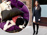 Olivia Munn takes to social media to encourage fans to adopt pets instead of buying them