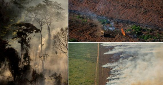 Amazon rainforest could 'collapse' as 2020 fires set to be most devastating yet