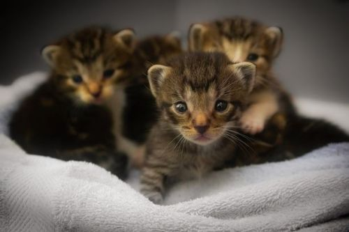 SSPCA in Hamilton in urgent appeal for kitten food