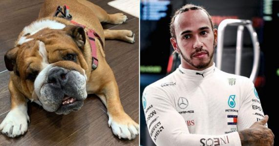 Lewis Hamilton reveals dog Roscoe is now 'fully vegan' and is 'super happy' with new lifestyle after pup Coco dies