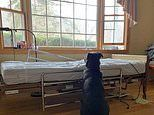 Heartbreaking image shows dog waiting for its owner by his empty hospital bed