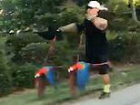 Bird-brained! Owner takes two parrots on leads out for a run
