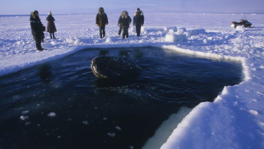 As the Arctic warms, the Inupiat adapt