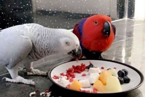 Burping and farting parrot speaks with a Glasgow accent and raves to music