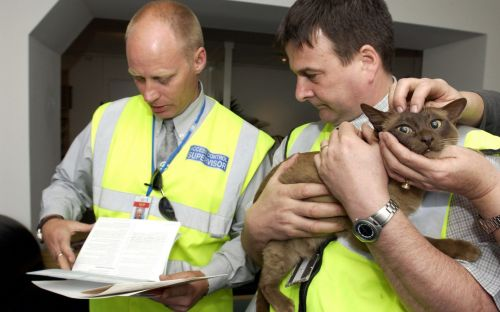 British cats, dogs and ferrets will need an EU pet passport to travel to Northern Ireland after Brexit