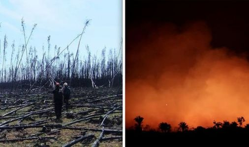 Amazon rainforest fires: Why NASA fears new wildfires will 'accelerate warming' of climate