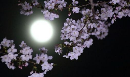 Pink Moon spiritual meaning: What is the meaning behind the Supermoon tonight?