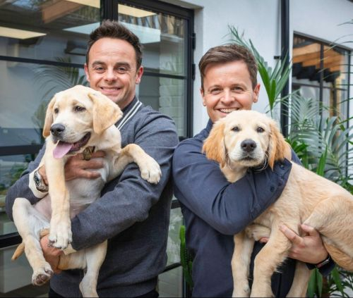 Ant and Dec cuddle adorable puppies named after them to launch the Guide Dogs Pups to Partnerships Appeal