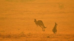 The Australian wildfires blaze on - and the pictures of suffering wildlife will hurt your heart