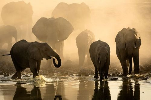 BBC Africa's Animal Oasis doc shows elephants drink from manmade waterhole
